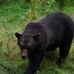 bear spray 1