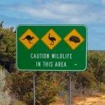 Australian Camping Tips 1